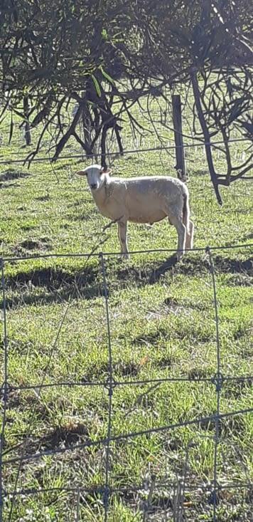 Les moutons 🐑