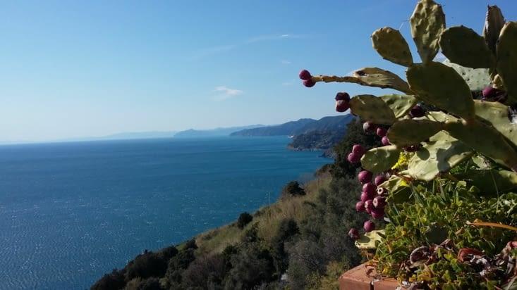 Route vers les Cinque Terre, cinq villages en pan de mer à franchir en randonnée si les
