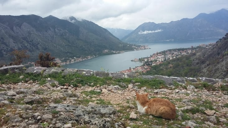 Randonner.  De Kotor à Lovcen, les chats sont ici les gardiens de la ville, même un musée