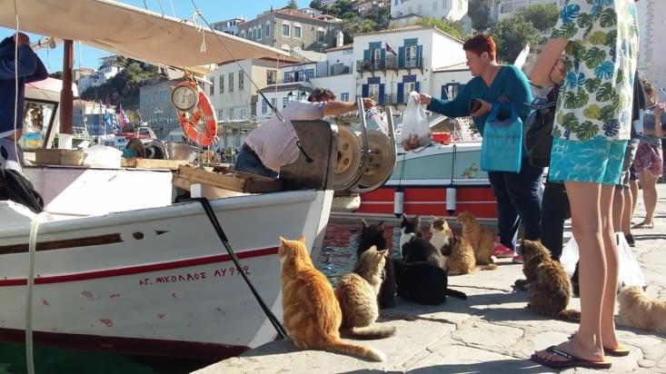et des chats qui attendent leur commande...