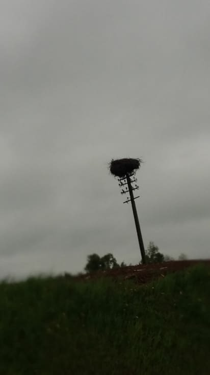 Ca c'est un nid à cigogne: depuis la Roumanie il y'en a sur les routes. Témoignage que