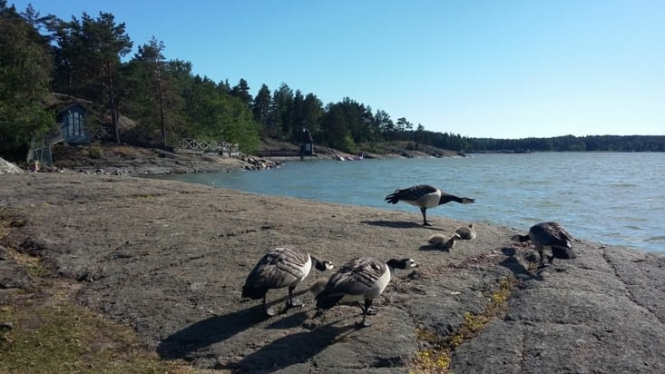 et des canards/ mouettes/ espèces inconnues qui nous intriguent .