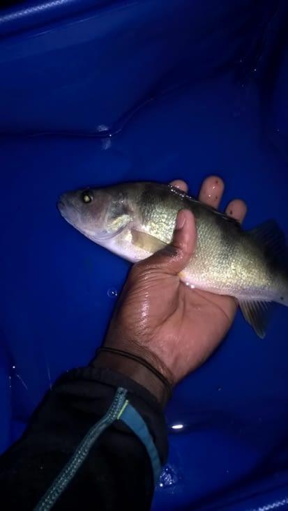 la pêche!! Doudou bravo !!