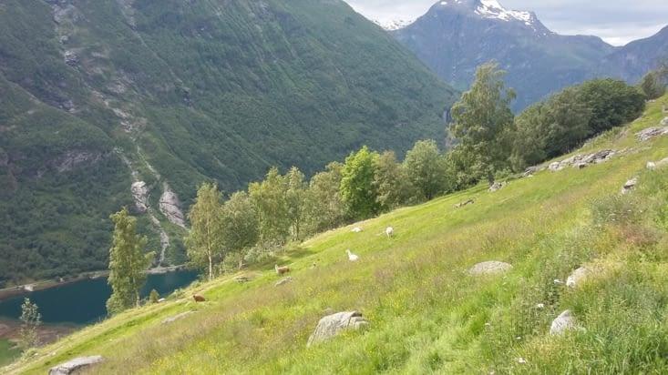 2ème chemin: avant de poursuivre, passage douanier obligatoire avec les moutons et les
