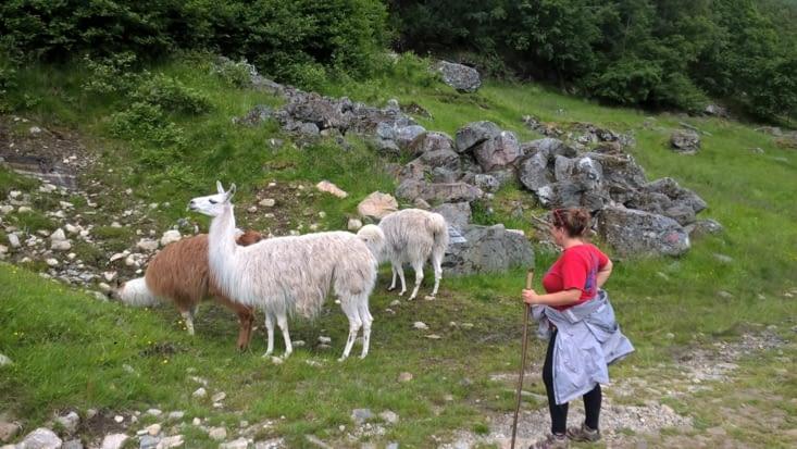 Une vraie bergère de lamas...