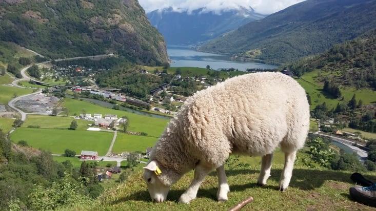 Cet endroit serait il  privatisé par le mouton ? il sait nous le rappeler,