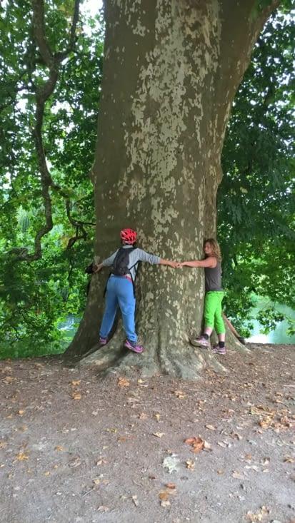 communion parfait avec les arbres