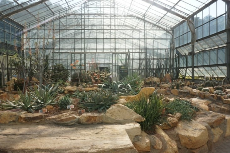 Arid plants green house