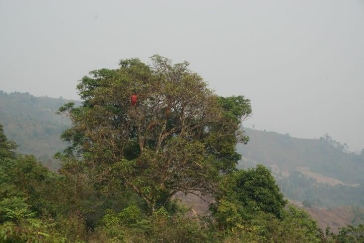 Enfants dans manguier