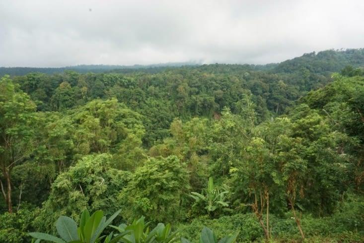 Plan large, Jungle, cascade et singes