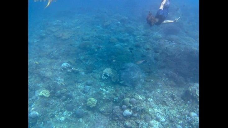 Sous l'eau