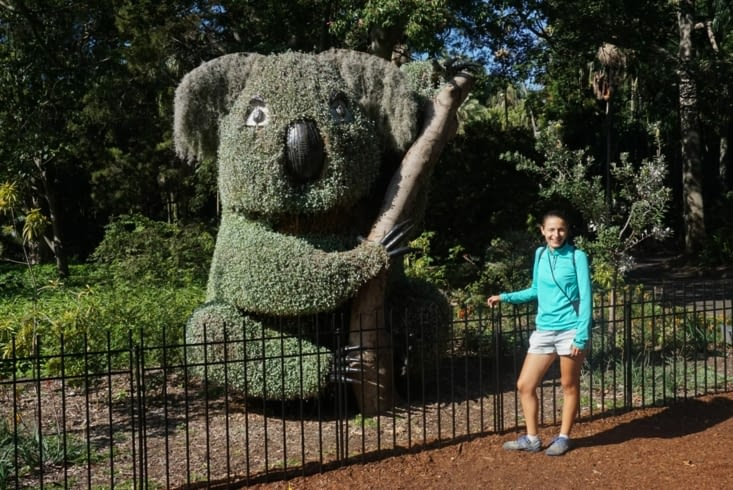 jardin botanique - copain  Koala