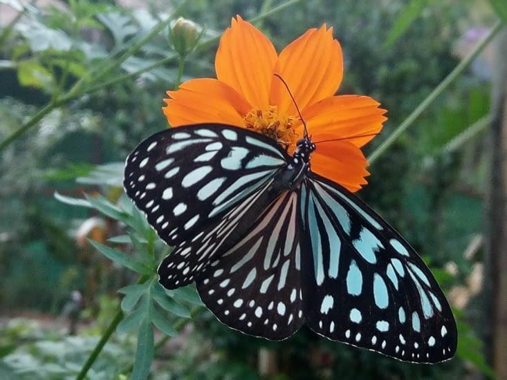 Ferme de papillon Kep