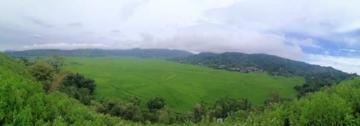 Rice Spider Field