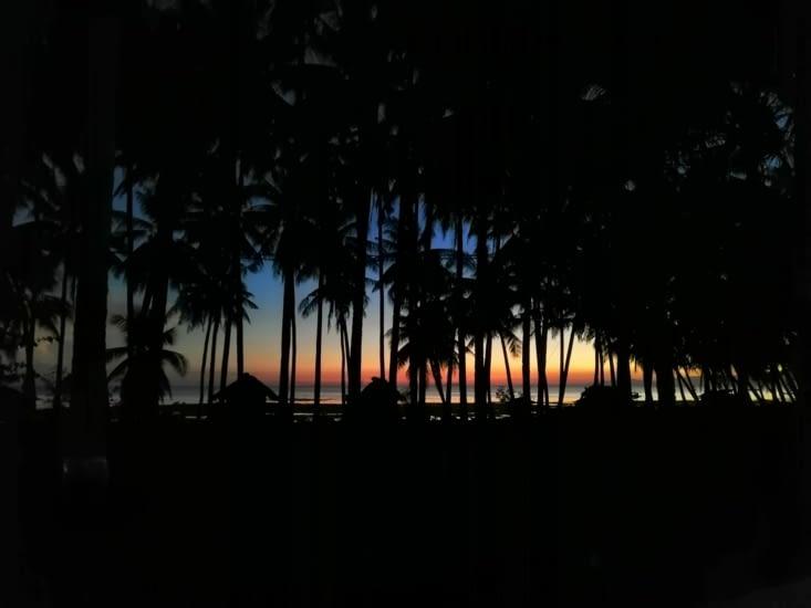 Coucher de soleil à travers les cocotiers