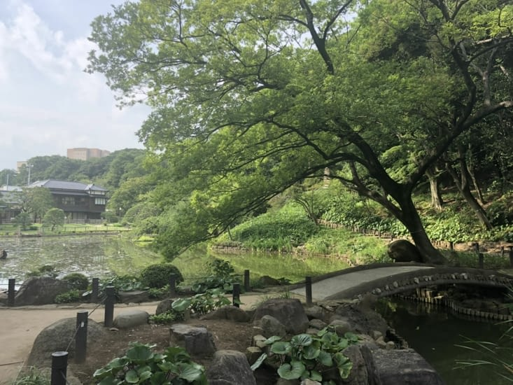 Découverte d'un jardin japonais