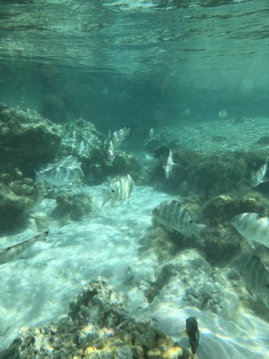 Un vrai aquarium