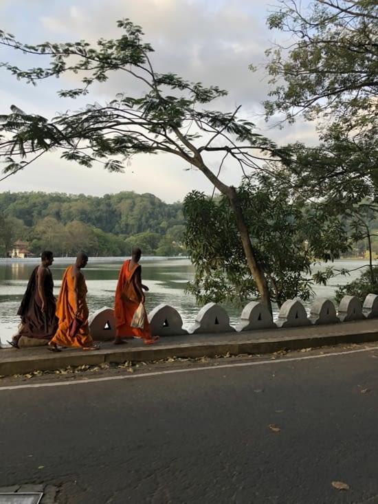 Des moines au bord du lac de Kandy