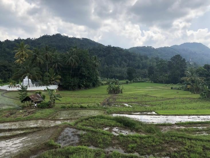 Arrêt au bord d'une rizière