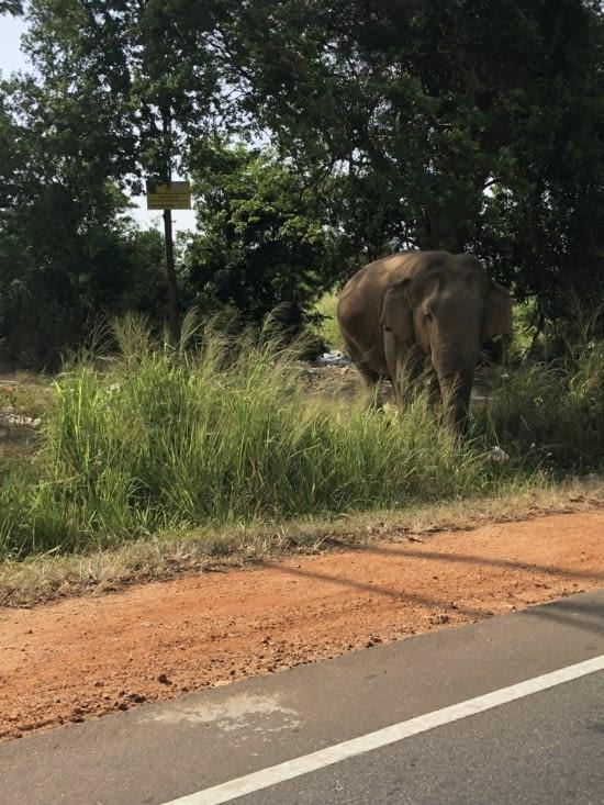 Un éléphant en bord de route