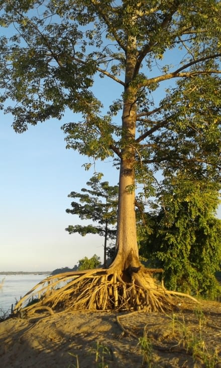 un arbre qui a réussi à pousser sur un talus