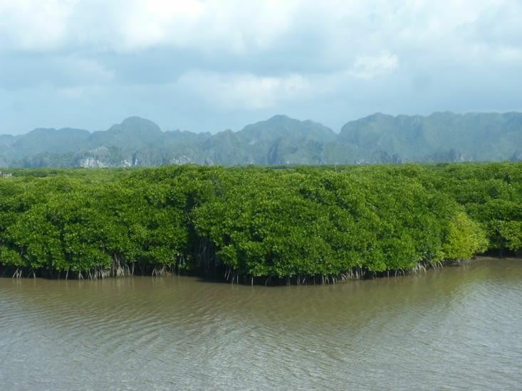 la mangrove qui pousse juste après le débarquement. Il y a aussi des parcs à huitres