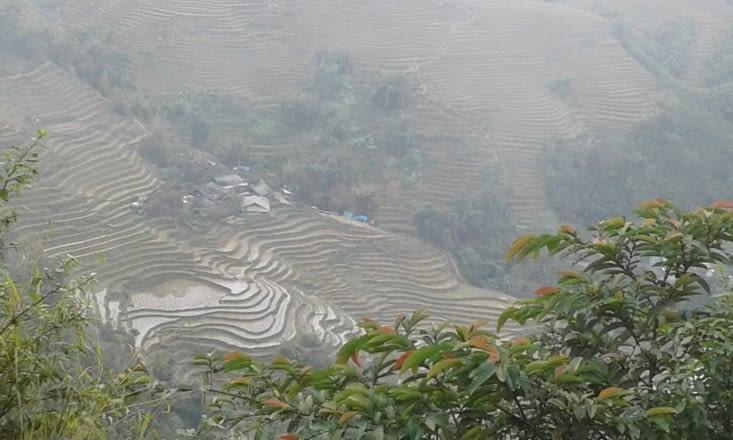 paysage de rizières dès que le brouillard se lève un peu