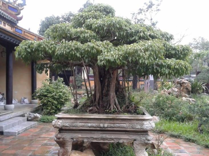 les jardins de Co Ha élaborés sous les 4 premiers empereurs ont été refaits