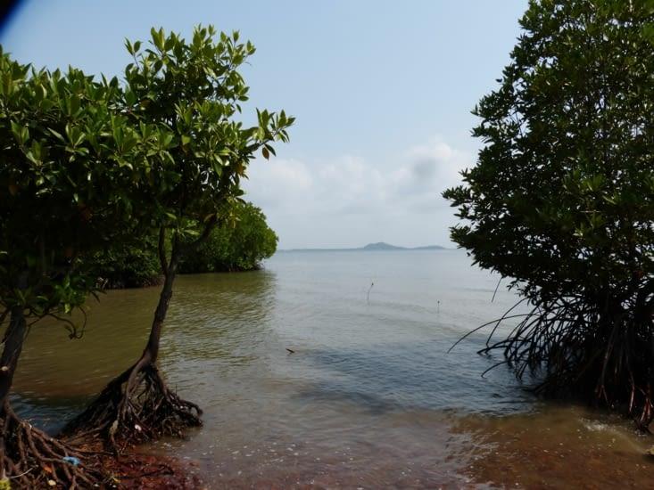 nous pataugeons dans la mangrove car il n'y a plus de chemin