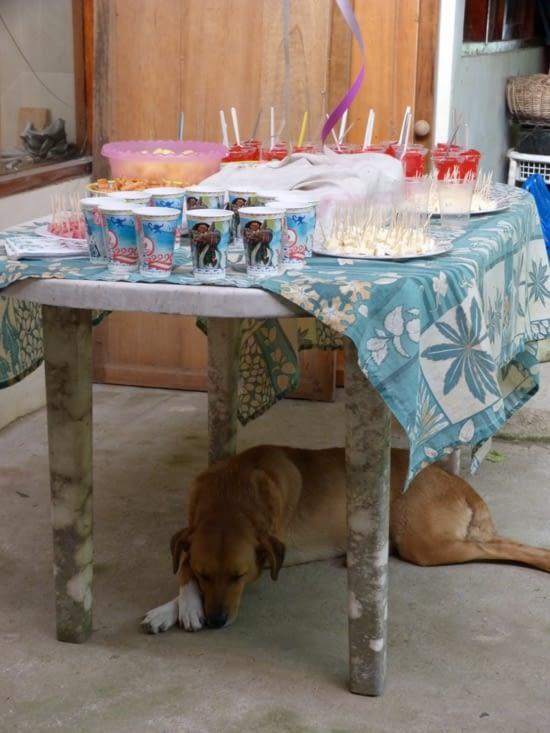 Cota notre chienne surveille le gâteau