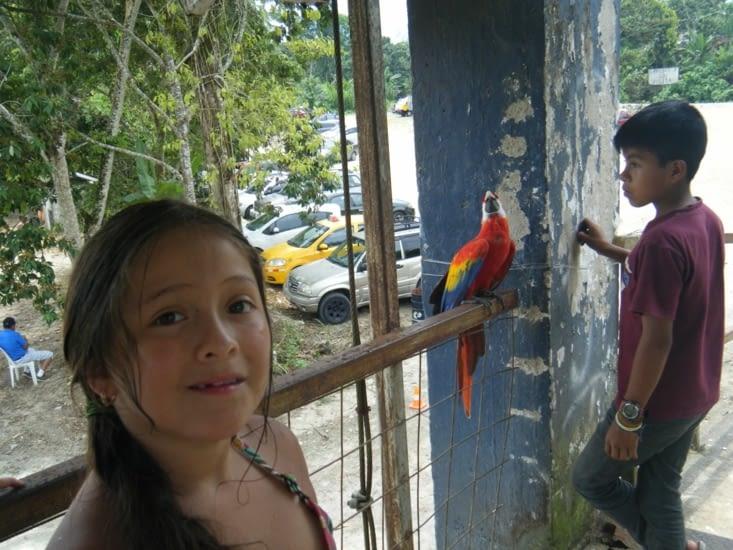 rencontre avec un ara rouge ici nommé guacamayo