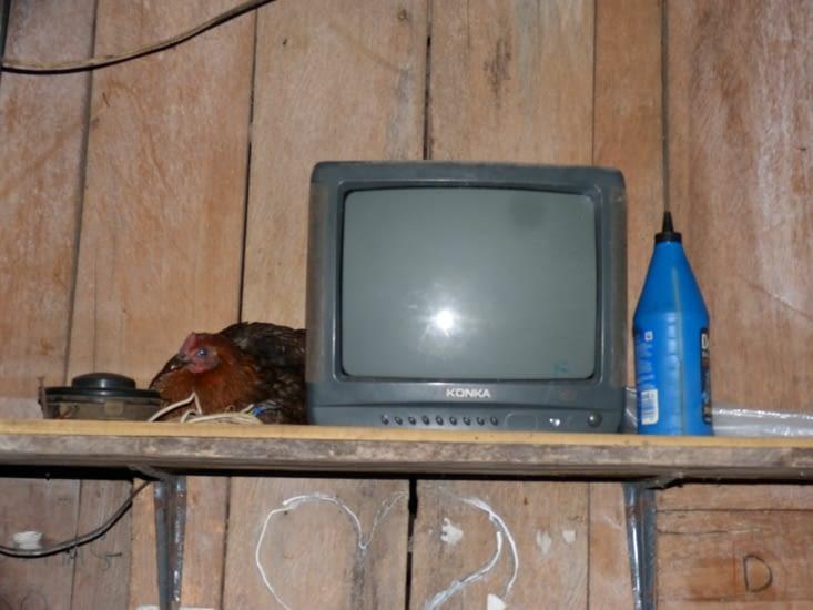 aficionada de tv qui ne fonctionne que lorsque le générateur se met en marche (quand il y