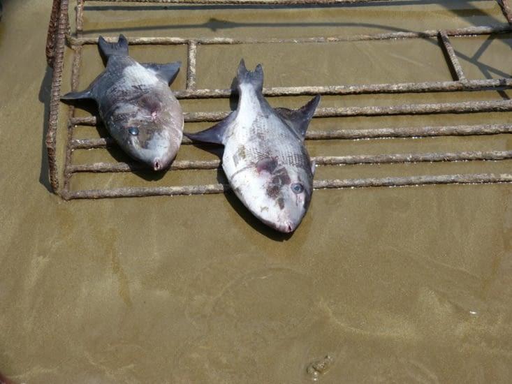 le poisson est pesé avant d'être acheté