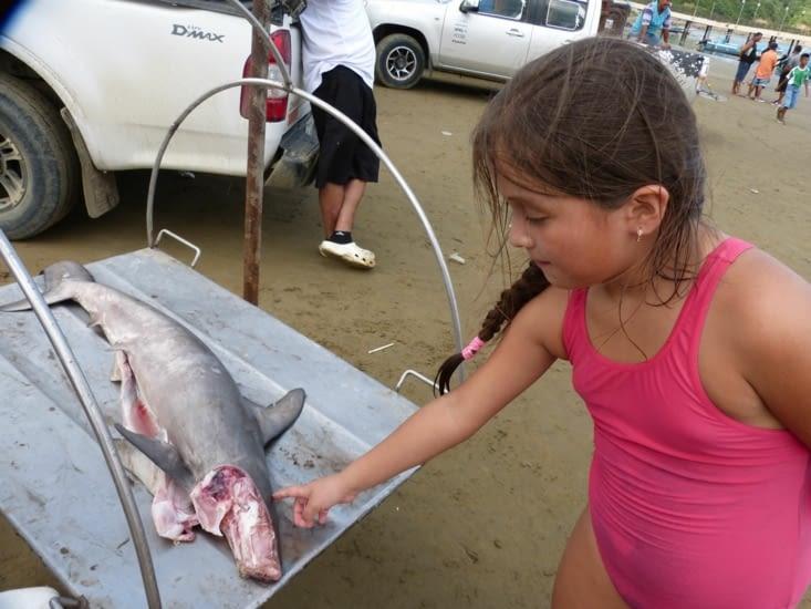 requin-marteau: même si sa pêche est interdite, il y a des accidents qui se renouvellent