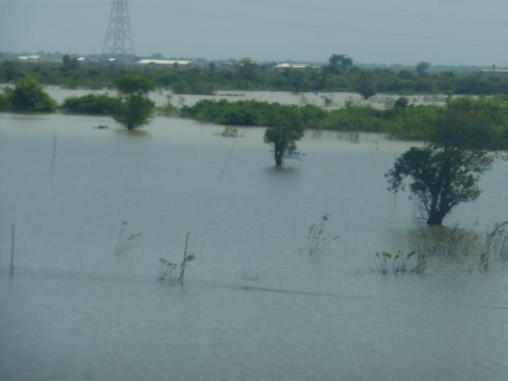 zone inondable,seules les cimes apparaissent