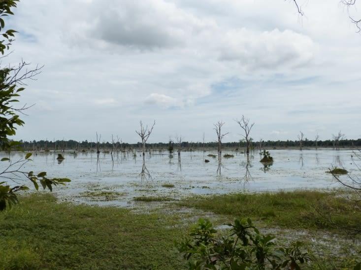 la fôret inondée entoure un îlot où est construit le temple de Neak Pean