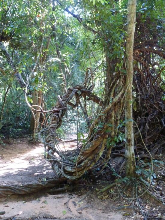 rando en forêt avec grimpette pour atteindre un temple nature dédié à,Vishnu