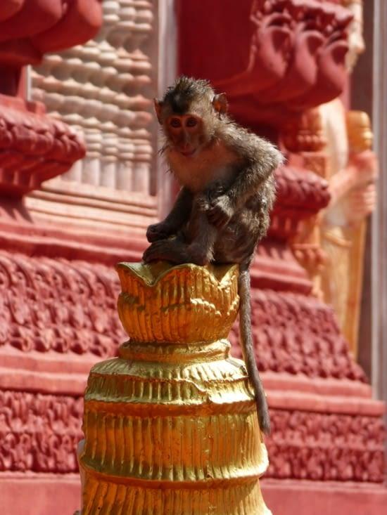 temple Wat Phnom Pros où les macaques sont rois.