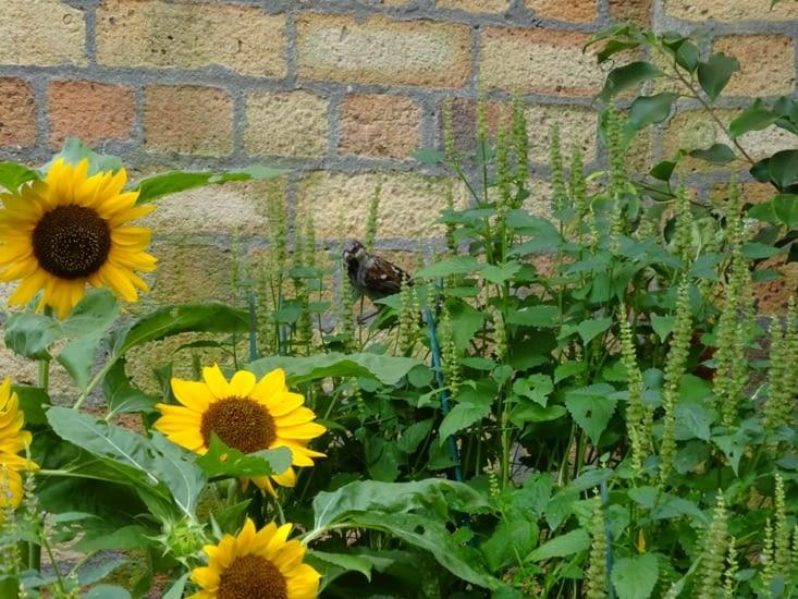 Un oiseau dans le jardin d'hiver