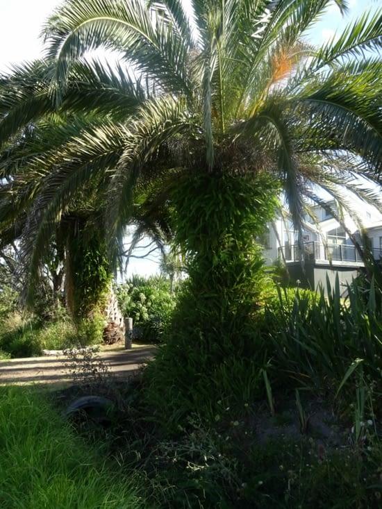 Les palmiers avec pleins de fougères !!