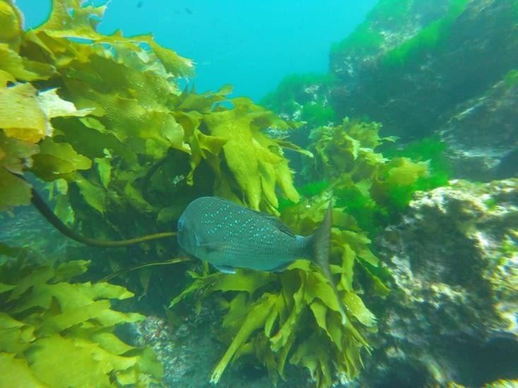 Encore un poisson différent (oups, je ne connais pas leur nom ...)