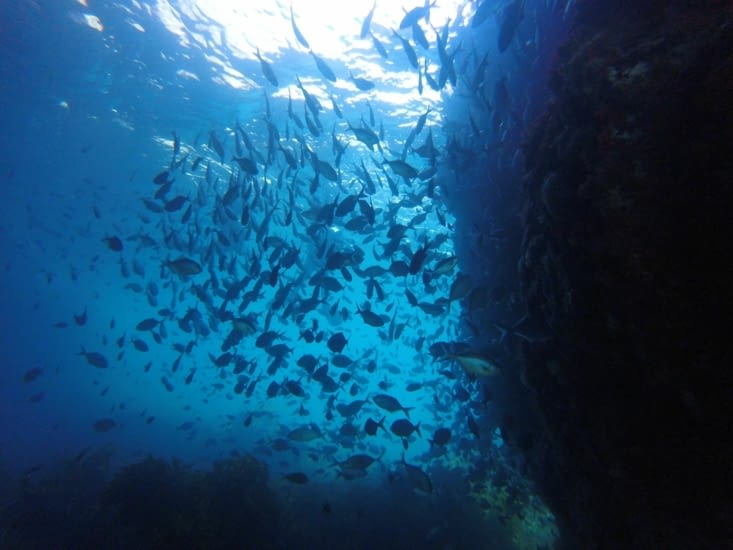 Nous sommes sous une arche qui cache pleins de poissons!!