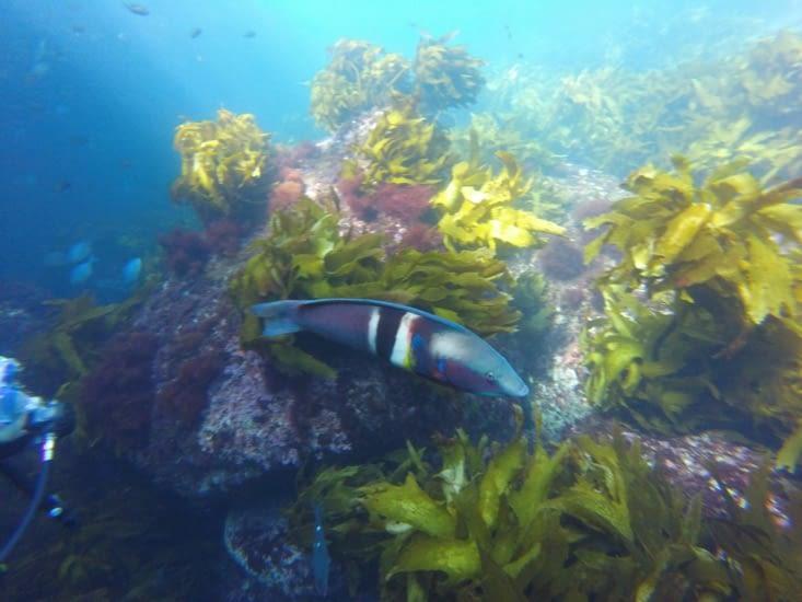 Un beau poisson coloré