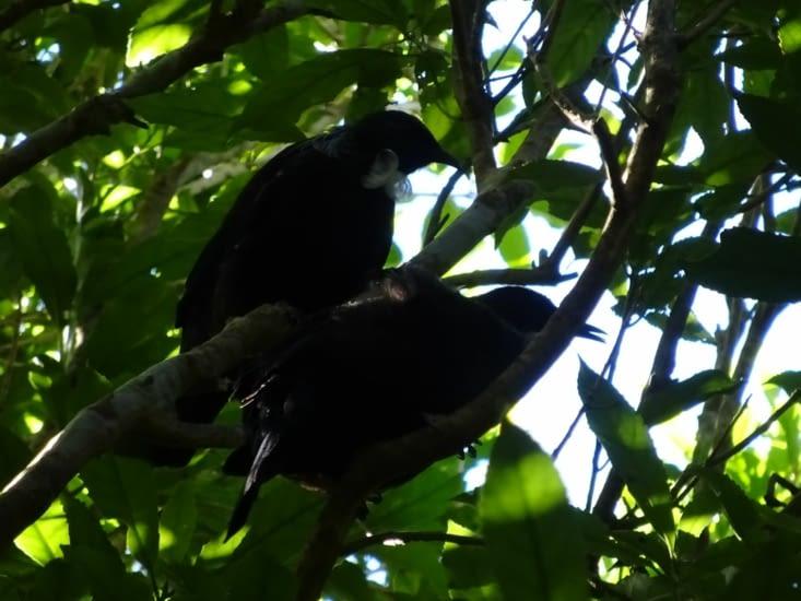 Et ses oiseaux