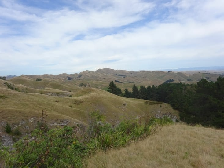 Les paysages de te mata peak