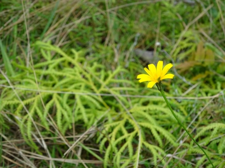 Une belle fleur jaune