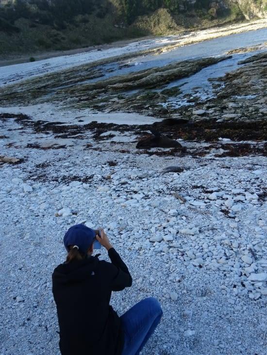 Je prends en photo les otaries croisées sur la plage