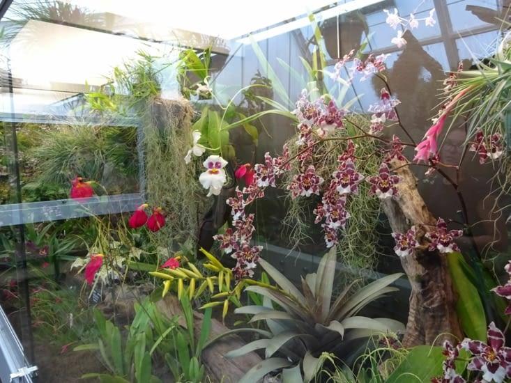 Encore de belles orchidées