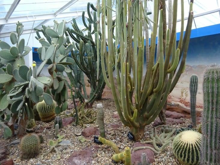Et des cactus ..