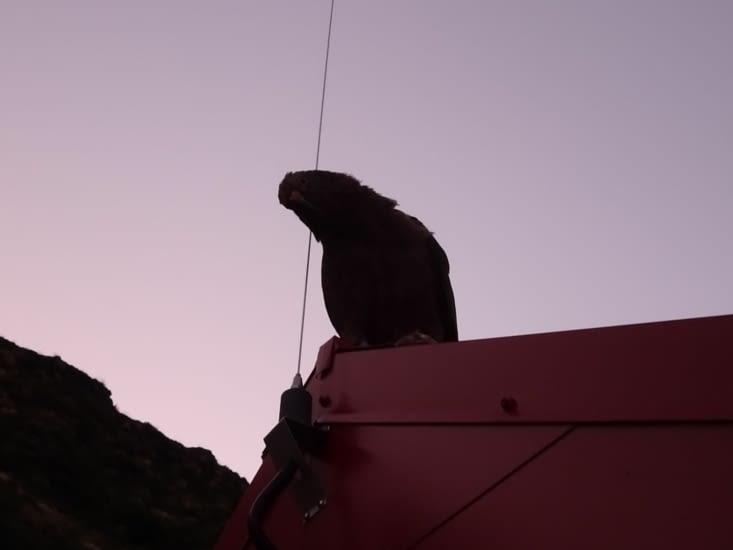 Le kea est sur le toit !!
